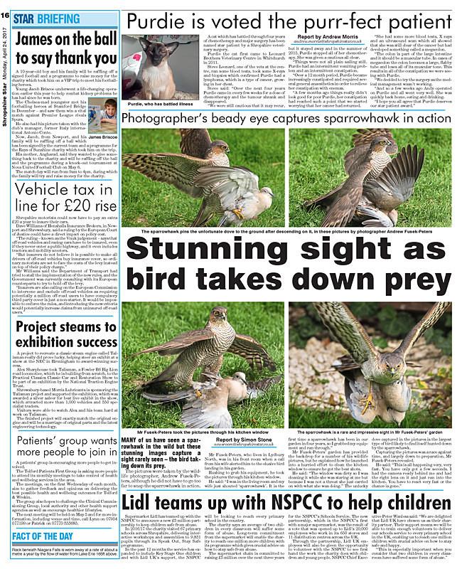 Shropshire Star photo feature sparrowhawk - Media & Awards