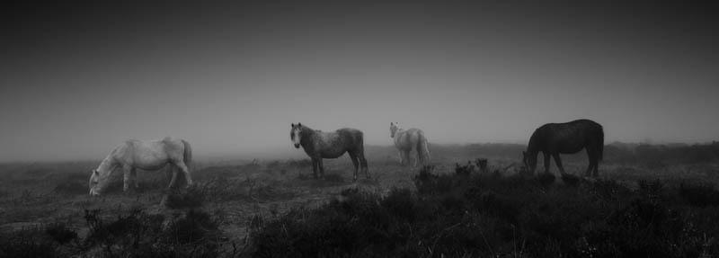 Wildlife on Shropshire National Trust sites-72 - Wilderland, Wildlife & Wonder from the Shropshire Borders