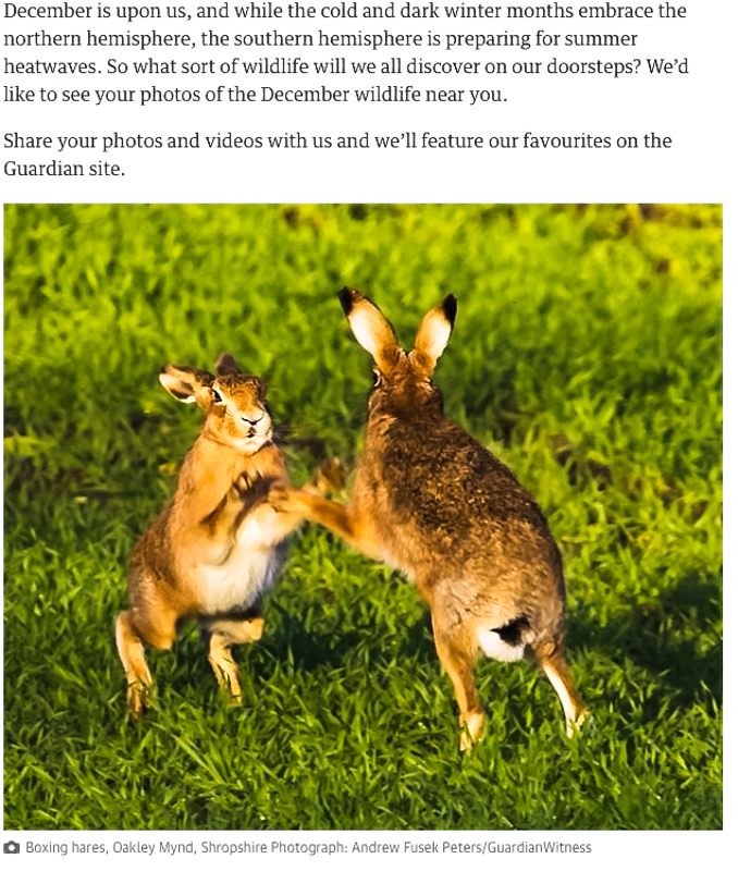 Boxing Hares, Guardian Online - Media & Awards
