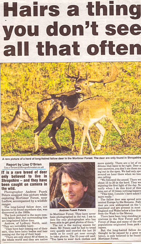long haired fallow Shropshire Star - Media & Awards