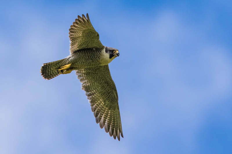 Wildlife on Shropshire National Trust sites-77 - Upland, Shropshire's Long Mynd & Stiperstones