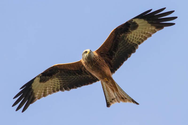 Wildlife on Shropshire National Trust sites-80 - Wilderland, Wildlife & Wonder from the Shropshire Borders