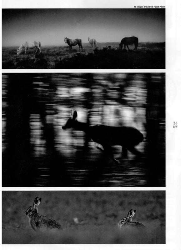 Black & White Magazine portfolio award 2 - Media & Awards