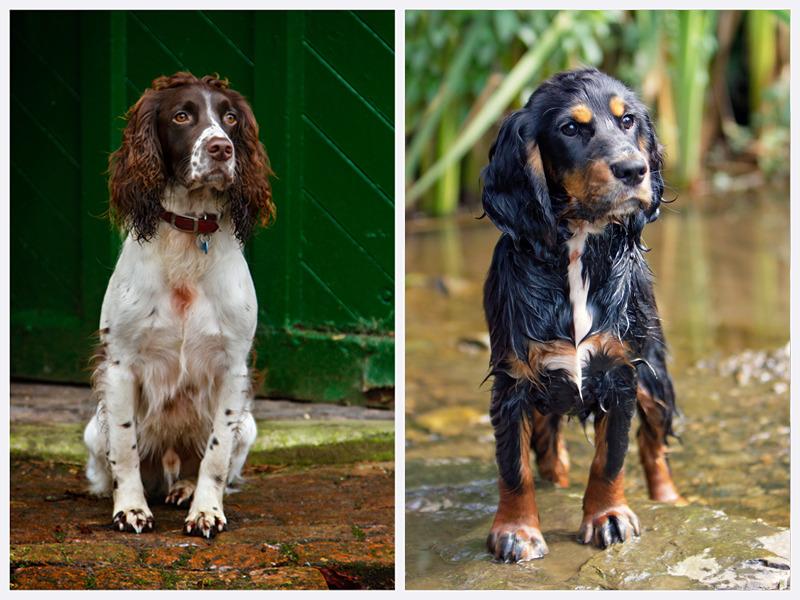 Dog Photography | East & West Sussex | rachaeledwardsphotography.co.uk