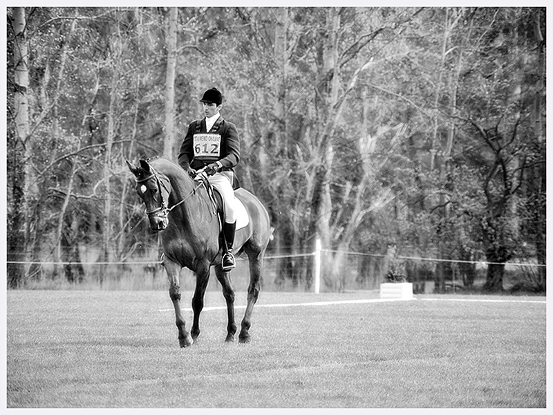 Artistic Dressage Photography | Sussex | Rachael Edwards