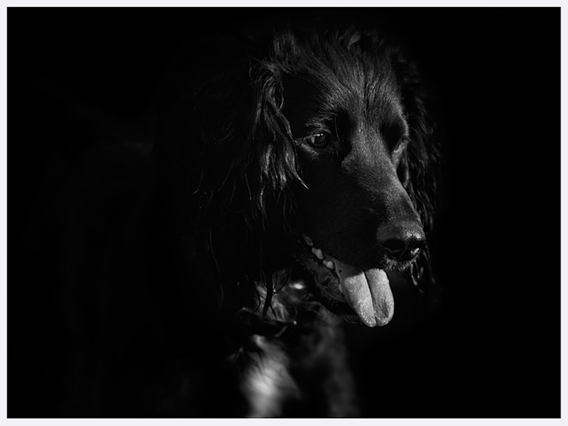 Classic Dog Photography | Fine Art Photography | Rachael Edwards