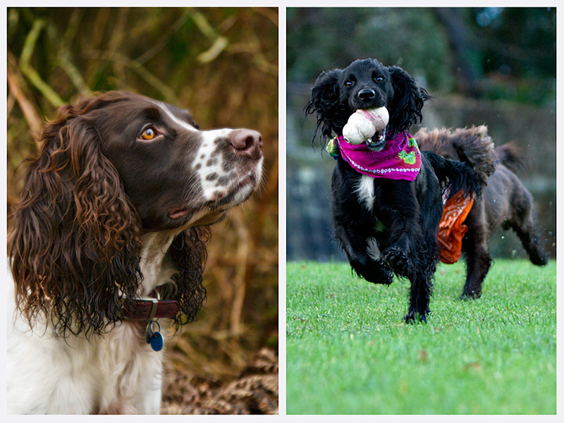 Action Dog Photography | Sussex | Rachael Edwards Photography