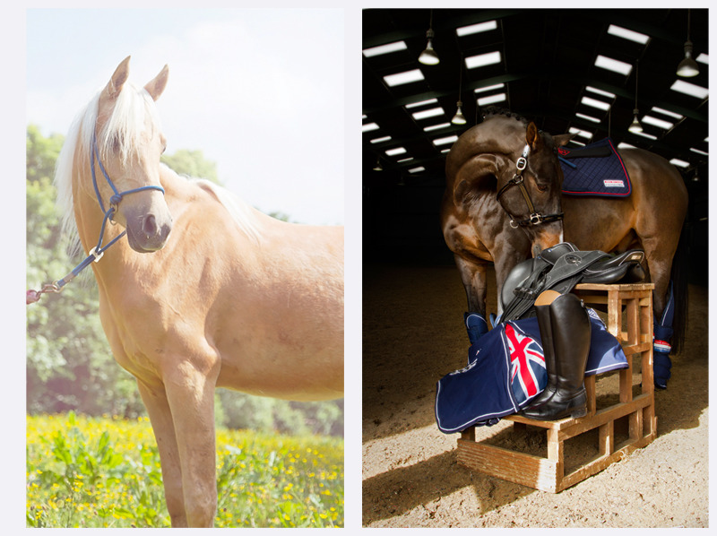 Horse Photographer | Sussex | Rachael Edwards Photography
