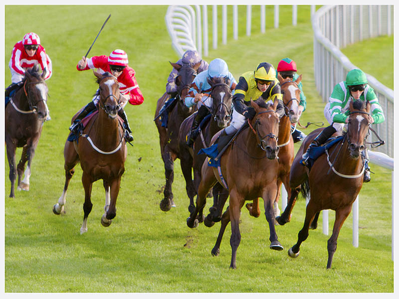 Horse Racing Photography | Sussex Cheshire | Rachael Edwards