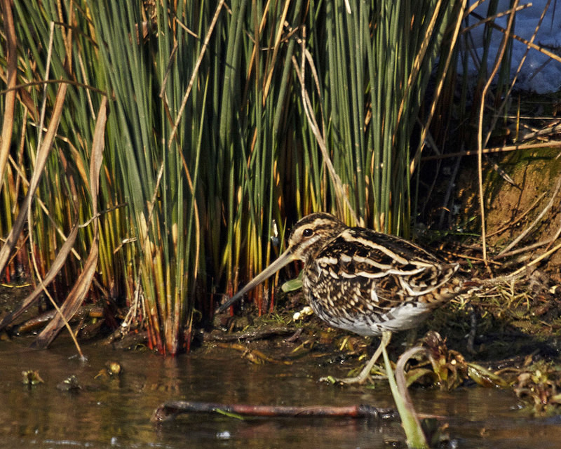 Snipe - Anything Else!