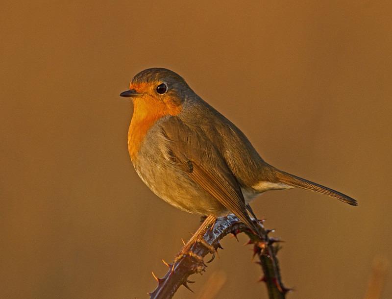 Robin - Anything Else!