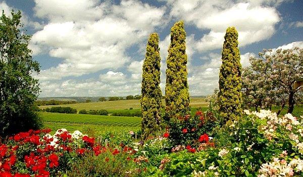 Coriole Winery - South Australian Wineries