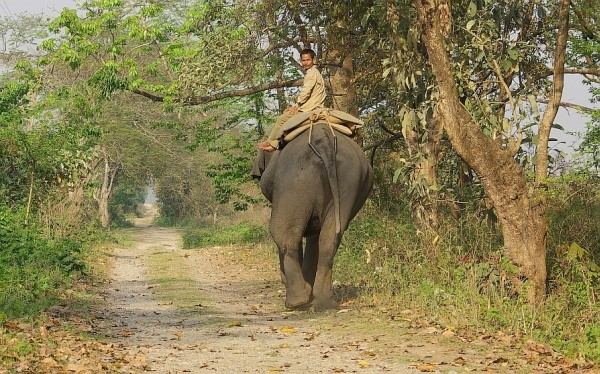 Elephant walk - India (Assam, Brahmaputra cruise, Agra and Jaipur)