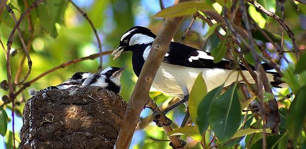 Happy nesters - Adelaide, South Australia
