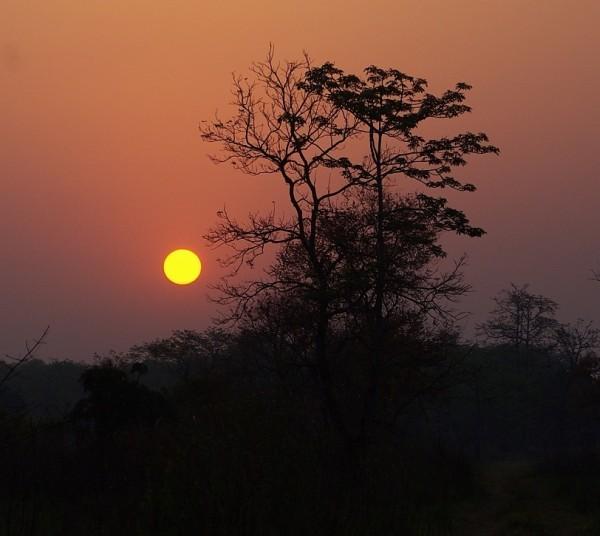 Jungle sunrise, Assam - India (Assam, Brahmaputra cruise, Agra and Jaipur)