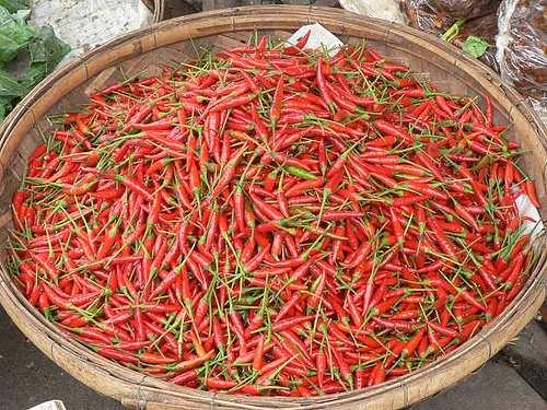 Hot stuff - Cambodia and Vietnam