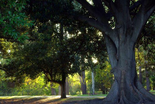Botanic Park at dawn - Adelaide, South Australia