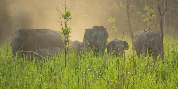 Wild elephant herd - India (Assam, Brahmaputra cruise, Agra and Jaipur)