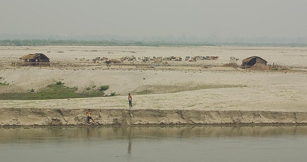Cattle, sand island - India (Assam, Brahmaputra cruise, Agra and Jaipur)