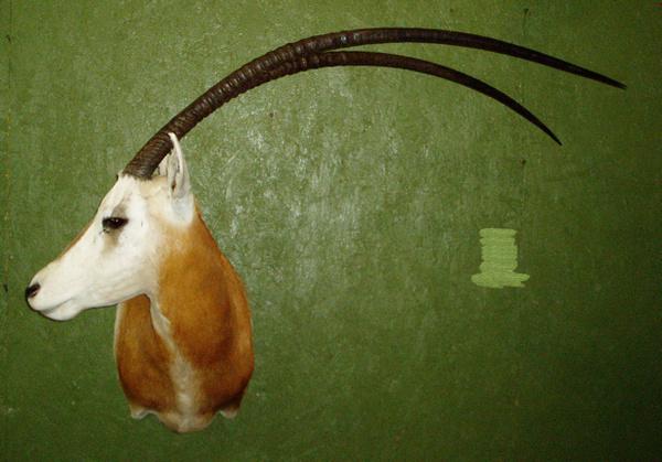 M. SMITH - Sheep/Antelope