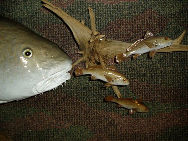 MARTINEZ - Fish