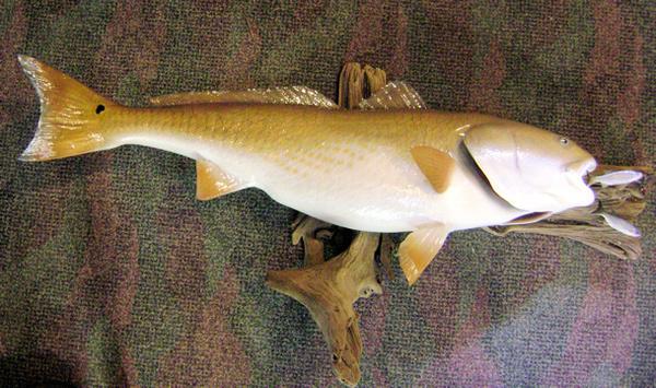 RUTLEDGE - Fish