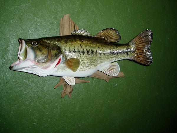 LEGGETT - Fish