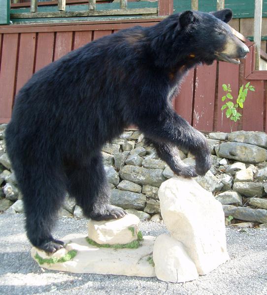VILLAGOMEZ - Lifesize & 1/2 Lifesize Large Animals