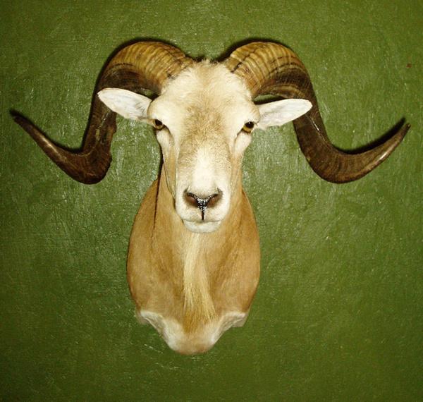 BURKETT - Sheep/Antelope