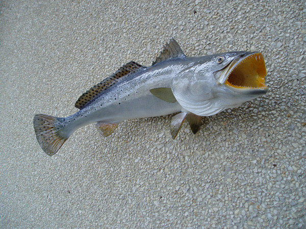 28' - JD SMITH - Fish