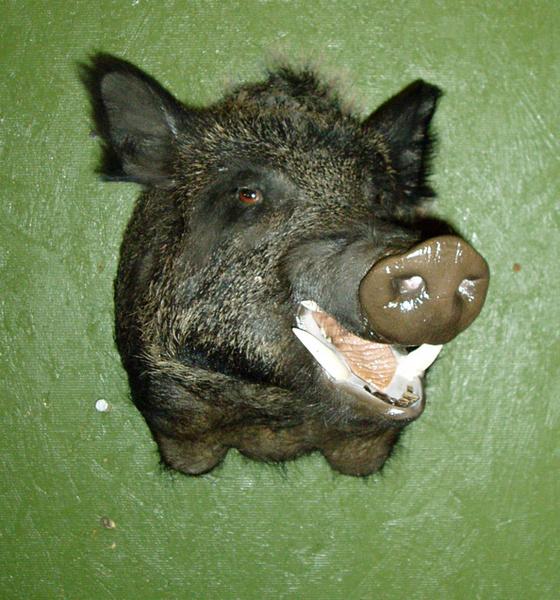 MONTERO - Hogs and Javelina