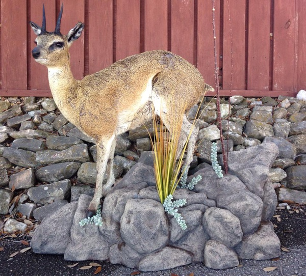 DUNN-KLIPSPRINGER - Lifesize & 1/2 Lifesize Large Animals
