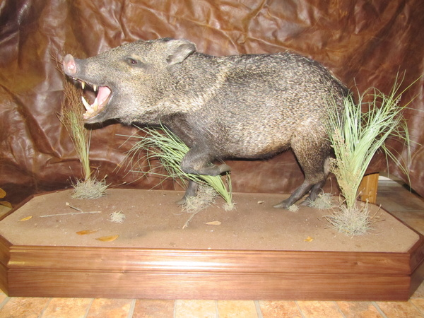 DANIEL DEFENSE - Hogs and Javelina