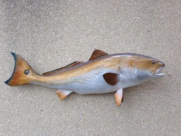 GARY BACON - Fish