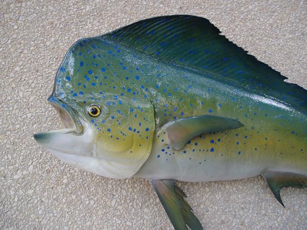 MONACO - Fish