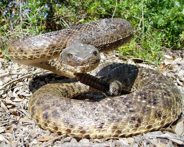 K. KOTZUR - Snakes