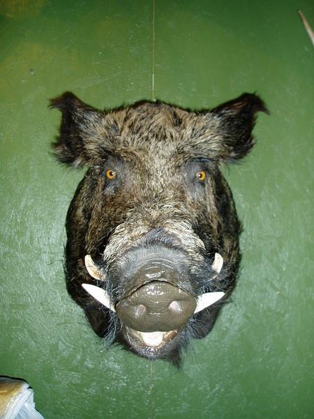 Kevin Scott-Paradise Farms - Hogs and Javelina