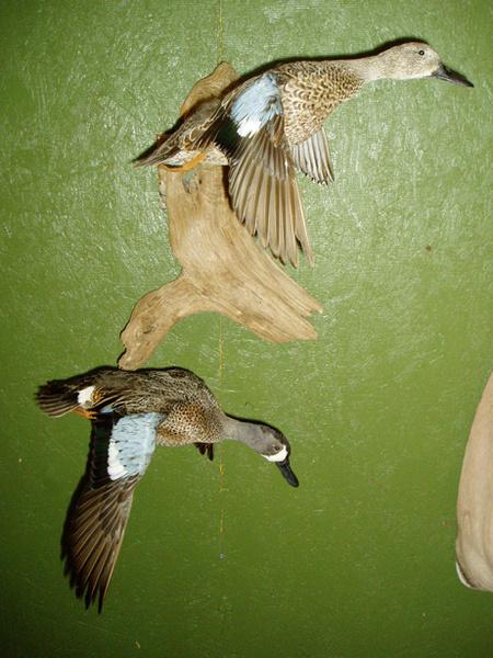 D. WEAVER - Birds