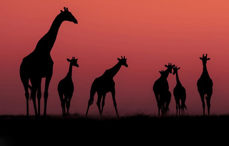 - Other Wildlife