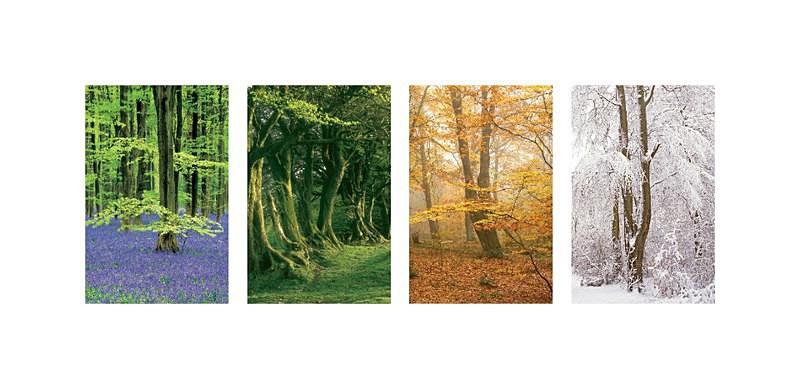 Beechwood seasons