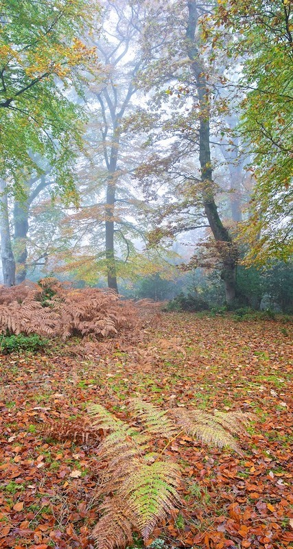 Autumn mists in the New Forest