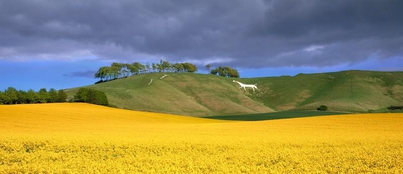 Cherhill Whitehorse, Wiltshire EDC036 - England