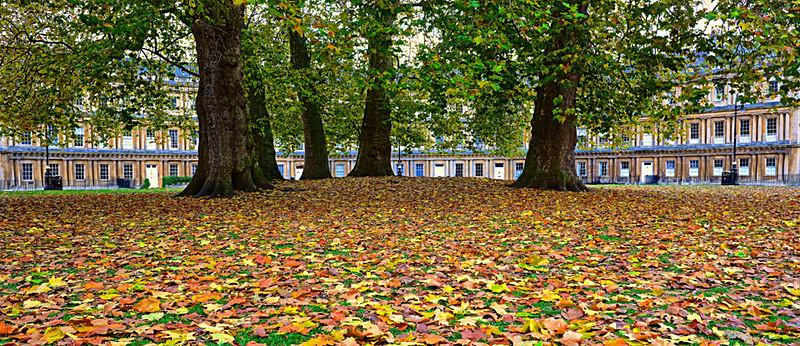 Autumn in the Circus, Bath EDC191 - Bath