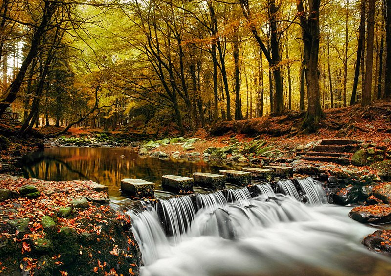Tollymore Stepping Stones - Irish Landscapes