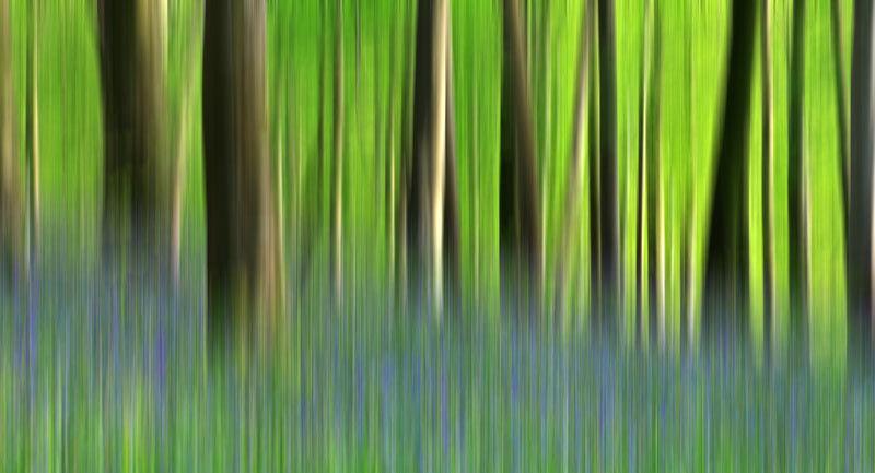 Blurred Bluebells - Landscape 2