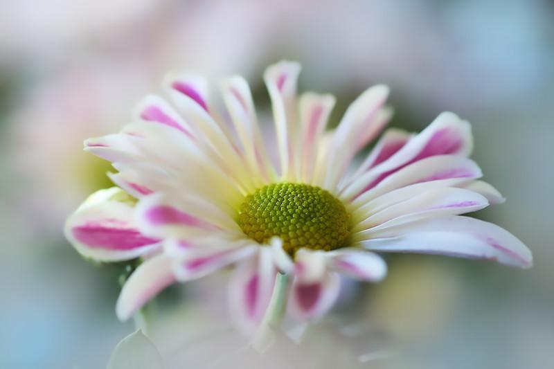 White flower - Flowers