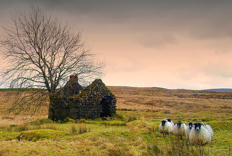 Old Cottage - Landscape 2