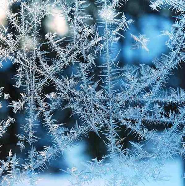Frosty - WINTER