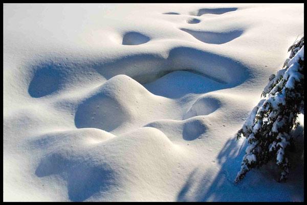Snow Art - WINTER