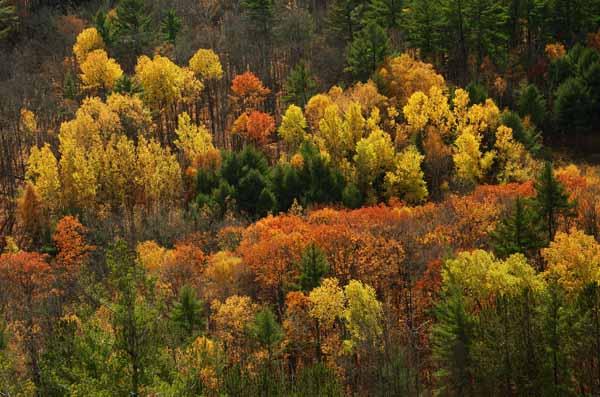 Forest of Colour - AUTUMN COLOURS